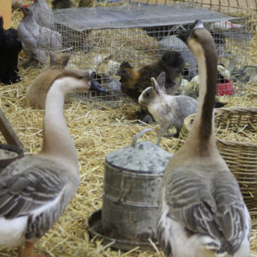 EXPOSITION NATIONALE D'AVICULTURE